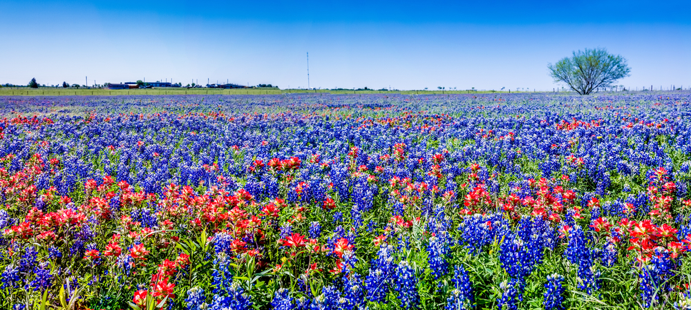 Taking Up A Hobby: Texas Wildflowers