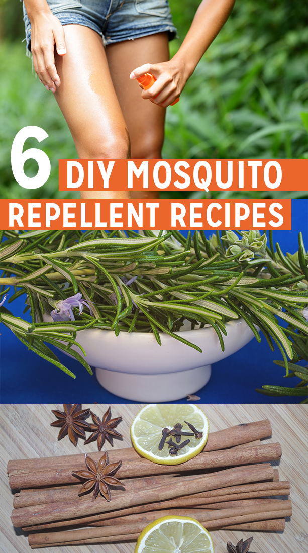 6 Homemade Mosquito Repellent Recipes for RVers