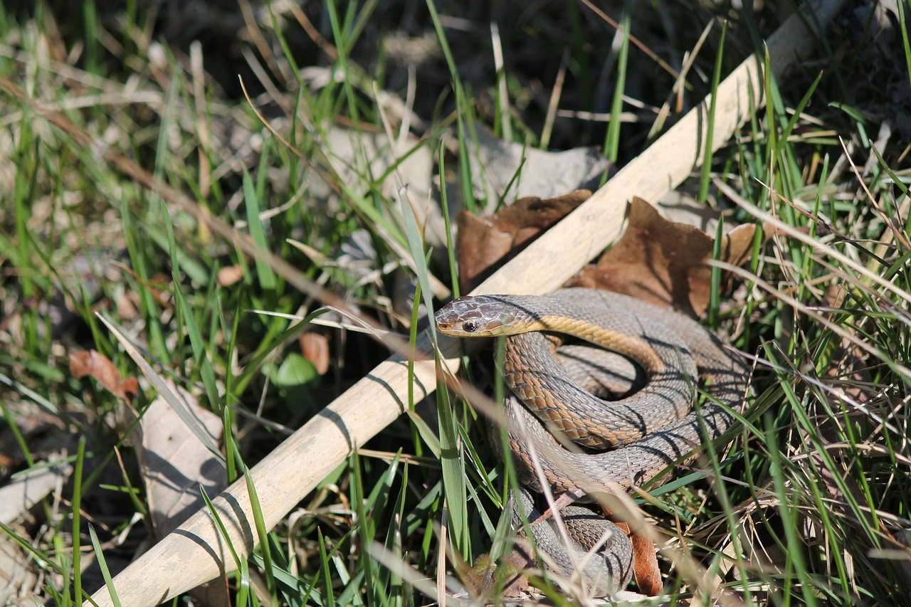 Poisonous Snakes RV Safety Rules RoverPass - Poisonous snakes in mississippi