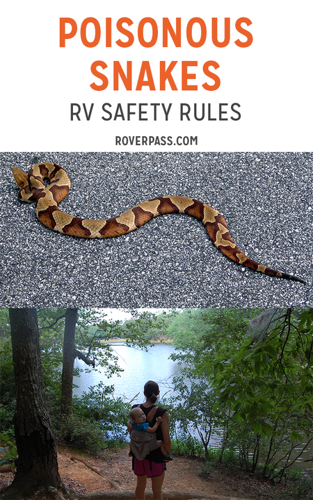 poisonous_snakes_-_rv_safety_rules_720