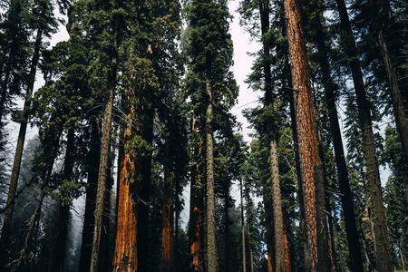 sequoia-national-park, CA